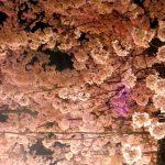 【2018年】大阪造幣局 桜の通り抜けの夜桜の実施期間と時間は?屋台はいつまで?