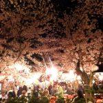 京都の円山公園の花見の場所取り情報と屋台と花見茶屋の紹介