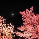 新潟の高田公園の桜の見頃とアクセス方法と近くの駅の駐車場利用のすすめ