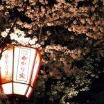 【2018年】京都の円山公園の桜のライトアップの時間と見頃とアクセス方法